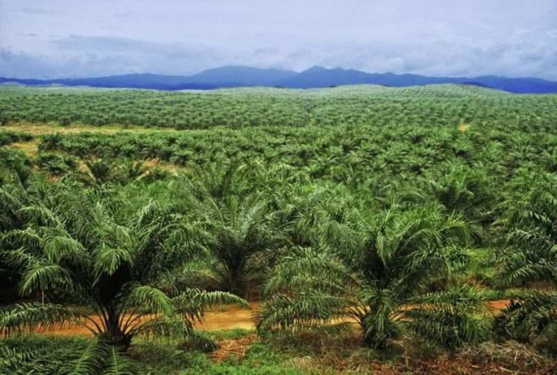pelatihan akutansi dan pengendalian biaya pada perusahaan perkebunan